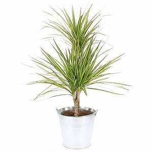 Plante Verte D Appartement : plante verte ~ Premium-room.com Idées de Décoration