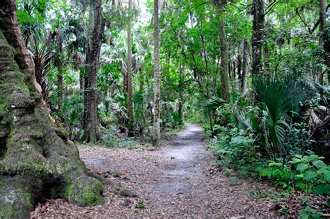 highlands hammock state park wauchula florida and the peace river
