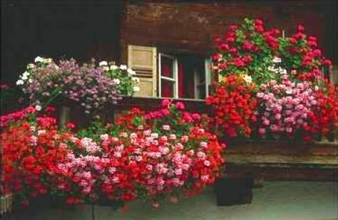 fiori da balcone primavera estate fiori da balcone in primavera idee da copiare donnaclick