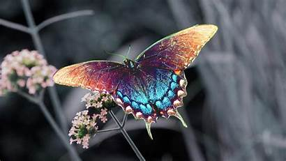 Butterfly Colorful Butterflies Pretty Colourful Rainbow Wallpapers