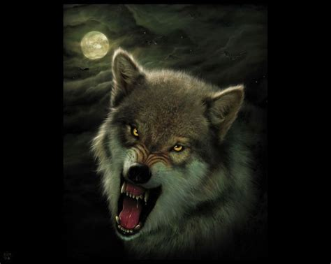 Angry Wolf Wallpaper Black by Angry Black Angry Wolf In Llops