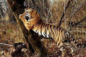 Pin Tiger Claw And Chin Na on Pinterest