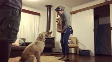 mom brings small puppy home older dogs reaction