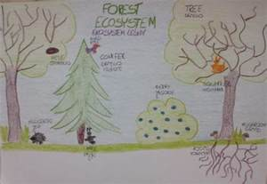 Forest Ecosystem Drawing