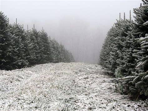 christmas tree farms in nc greene tree farm choose and cut christmas trees boone nc 5892