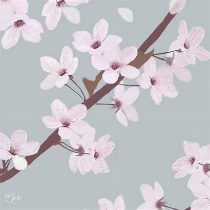 Cherry Blossom Animated Flowers Illustration Digital Sakura