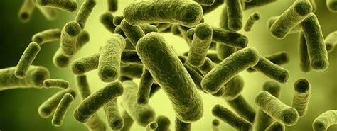 Alimenti Prebiotici by Probiotici E Prebiotici Project Invictus