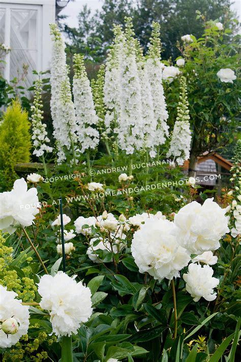 white garden flowers df017489 white flower garden photo jpg
