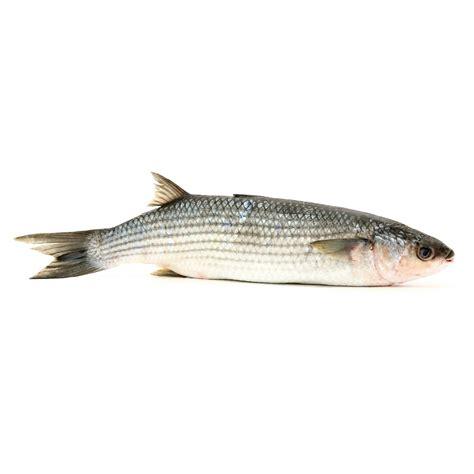 christophe cuisine mulet poissons et fruits de mer