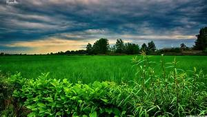 Stormy, Clouds, Over, Green, Field, Wallpaper
