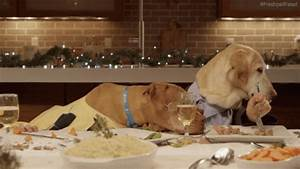 Dog Human Eating GIF - Find & Share on GIPHY