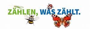 Feldwespen Nest Entfernen : presse nabu regionalstelle rheinhessen nahe ~ Frokenaadalensverden.com Haus und Dekorationen