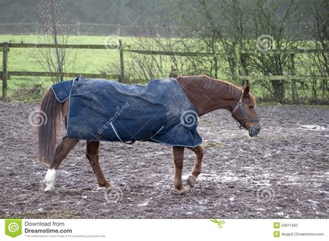 Horse With Rain Blanket Stock Photo