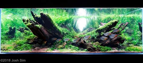 Aquascaping Tips by Aquascaping For Beginners 10 Helpful Tips
