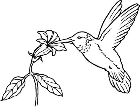 Printable Picture of Hummingbirds Animal Coloring Pages