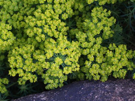 flowering shrubs for shade top 28 shade shrubs 7 shrubs for shade gardens hgtv flowering shrubs for shade gardens