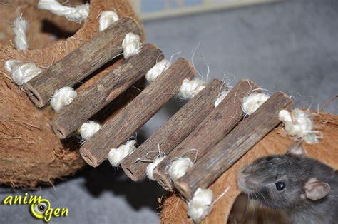 jeux de rat jeux et cabanes pour rongeurs noix de coco avec ponts suspendus europet bernina animogen