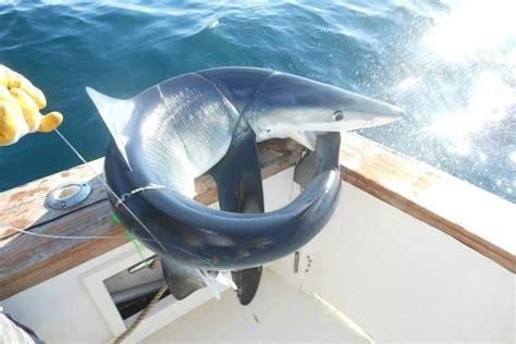 Fishing Boat Rentals Belmar Nj by Rent A Henriques Sport Fisher 44 Motorboat In Belmar Nj