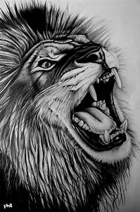 Graphite Pencil Drawing - Lion by fungidesignz on DeviantArt