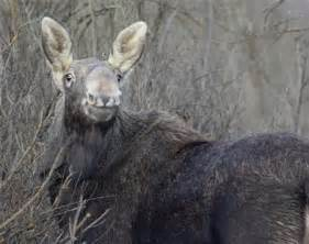 Fw Stands For by Chernobyl Animals Worse Affected Than Thought Study Reuters