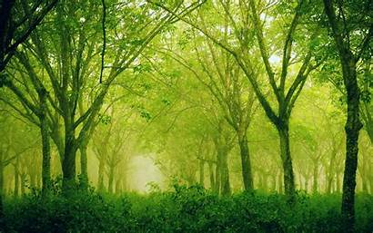 1800 2880 Retina Wallpapers Display Forest Sublime