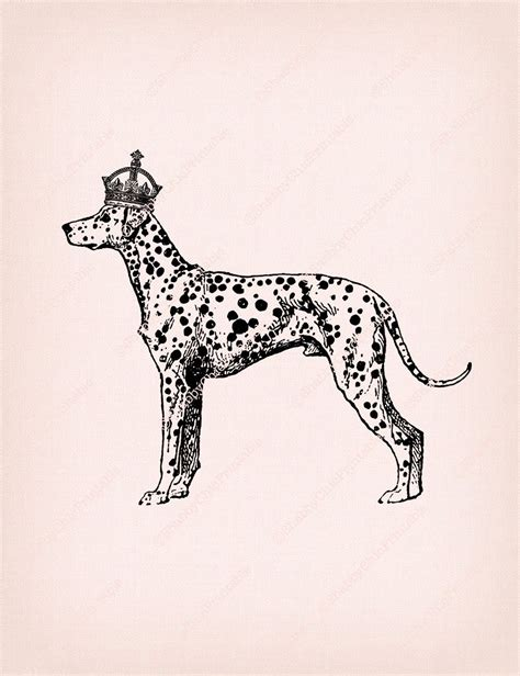 pin  unoprint  dog antique image collage