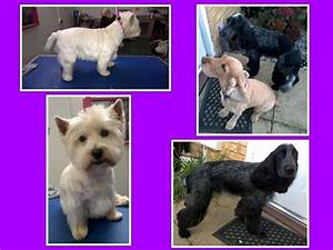 Dip snip and clip dog grooming dog grooming company in for Snippets dog grooming