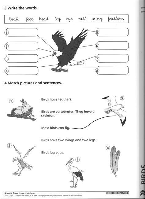 images  elementary animal classification