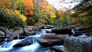 Natural, Autumn, Mountain, River, Rock, Noise, Yellow, And, Red, Leaves, Beautiful, Hd, Wallpaper