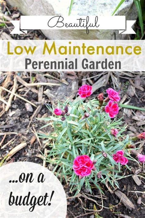 low maintenance perennial garden on a budget the creek