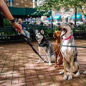 Professional dog walker certificate course for Puppy dog walker
