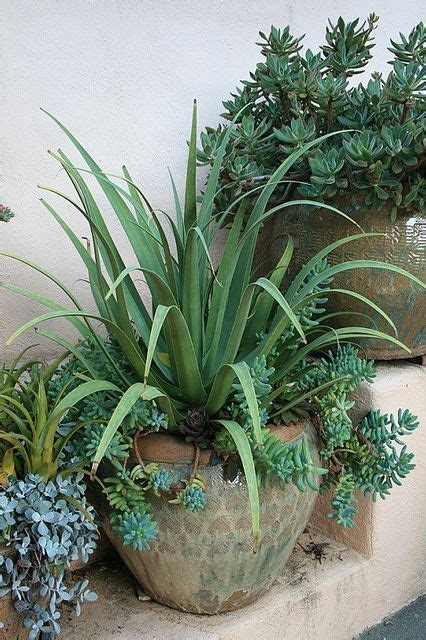 agave tree and landscape 793 best images about cactus and succulents on pinterest gardens plants and agaves