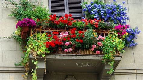 terrazza fiorita isolotto il concorso quot balcone fiorito pi 249 bello quot per