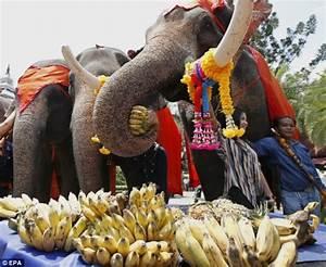 Thai Elephant Day... - Chess Forums - Chess.com
