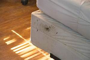 17 easy tips to prevent bed bugs catseye pest control With bedbugs on bed