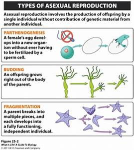 Fragmentation Of Asexual Reproduction |Genetic Engineering ...