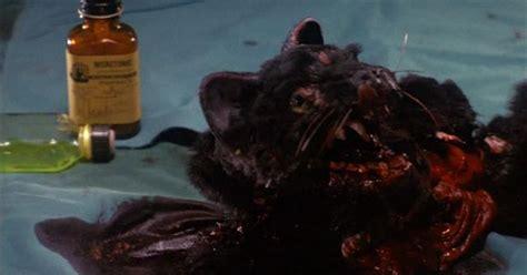 Eight Horrifying Zombie Animals In Movies  Blood Sucking Geek