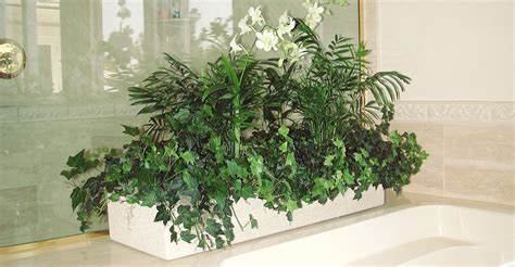 designer plants 100 interior plants keeping plants in the office can help clean the air and even stylish