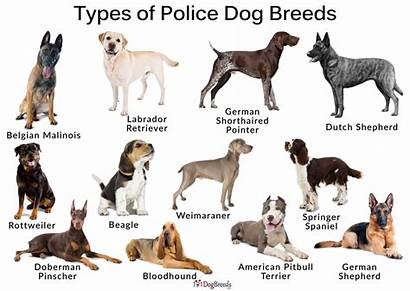 Police Dogs Types Breeds Dog K9 Tracking