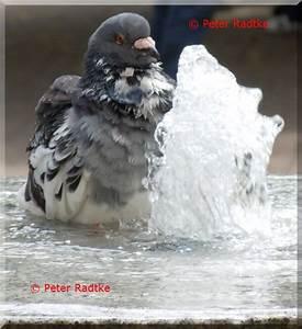 Einverständniserklärung Fotos Veröffentlichen : v gel peter radtkes fotos ~ Themetempest.com Abrechnung