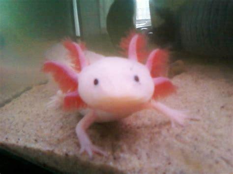 donne poissons et aquariums animaux gratuit 224 donner