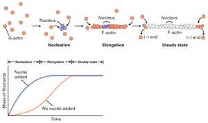 cell-cell interactions Leaders in Pharmaceutical