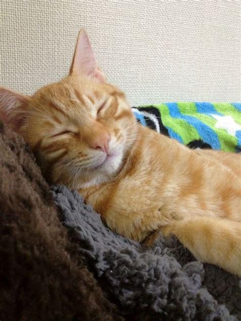 cat ginger cats orange why kittens tabby smiling cute they kitty pretty often walk crazy hamusoku forward
