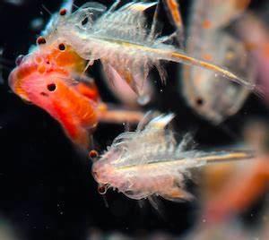 Lebendfutter Für Fische : lebendfutter kaufen i meerwasser shop aquapro2000 ~ Watch28wear.com Haus und Dekorationen