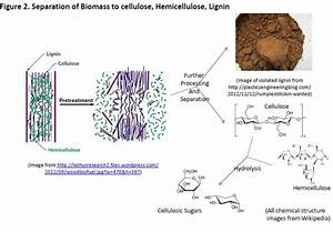 Second Generation Biomass Feedstock 5: The Complex ...