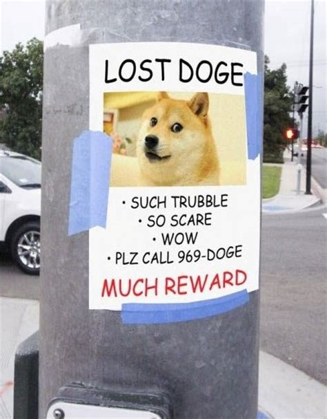 Lost Doge Meme - angry torro lost doge