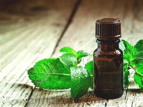 peppermint oil  migraines   work