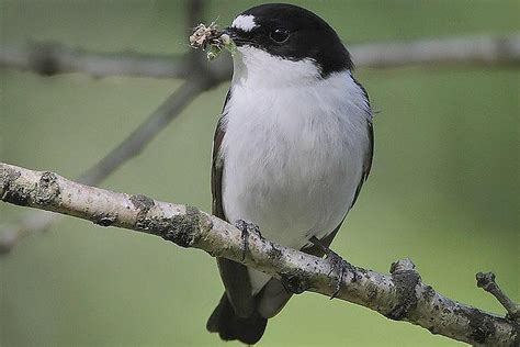 insects   nutritious diet  insectivorous birds