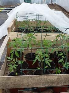 Planter Des Graines De Tomates : photo futurs plants de tomates ~ Dailycaller-alerts.com Idées de Décoration