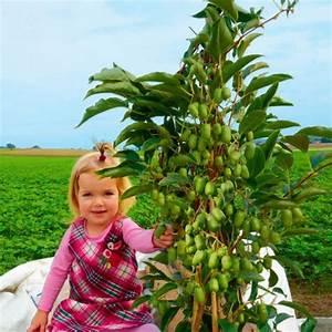 Pflanzen Schneiden Kalender : kiwi julia online kaufen bei g rtner p tschke ~ Orissabook.com Haus und Dekorationen